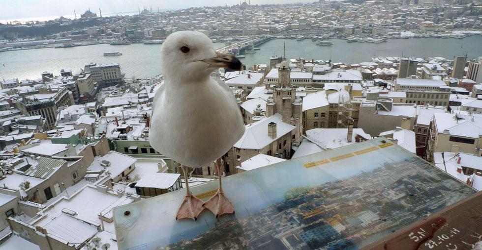 TURQUIA, 01.02.2012. O olhar da gaivota. Na Torre Gálata, em Istambul.