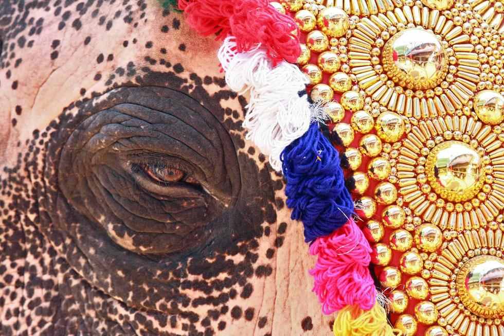 ÍNDIA, 01.02.2012. O olhar de um elefante com traje festivo para um festival anual de Kochi.
