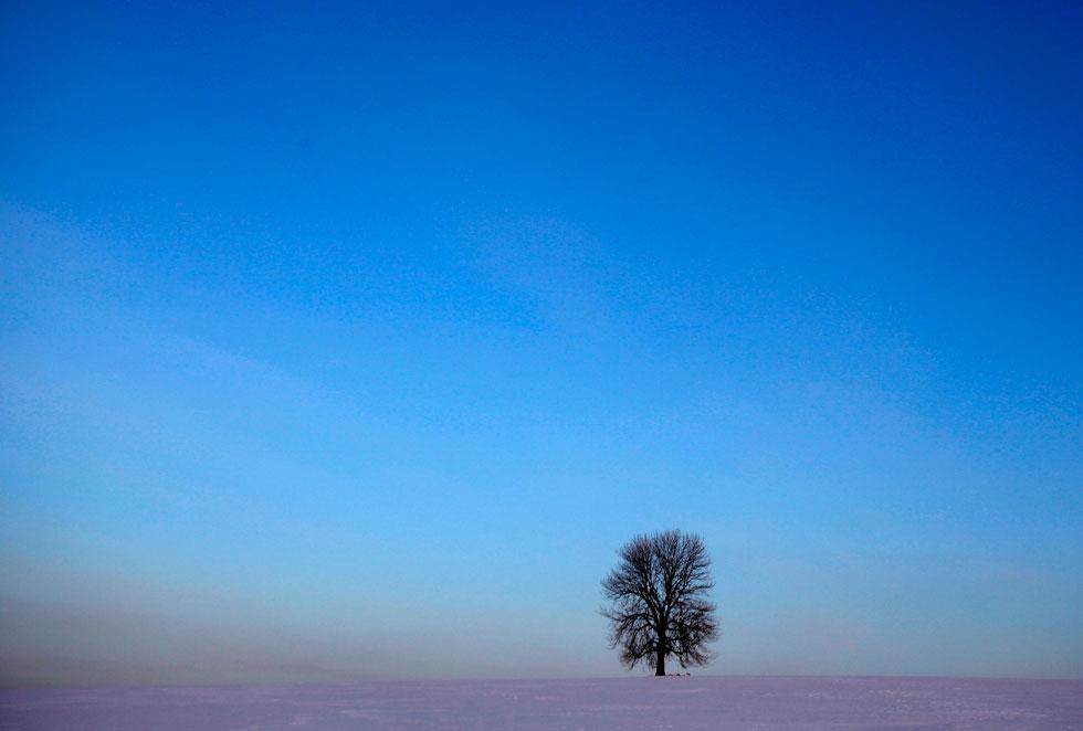 REPÚBLICA CHECA, 10.02.2012. Uma árvore solitária em campo coberto de neve perto de Rovne.