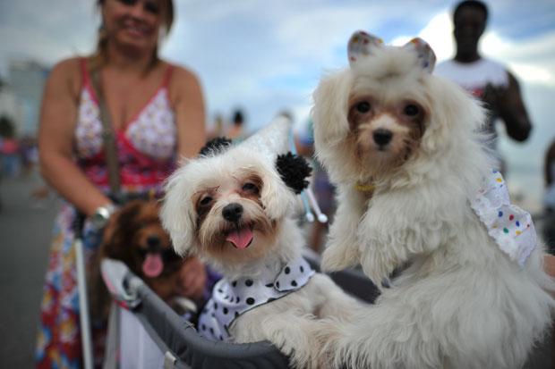 BRASIL. Duas estrelas do  Desfile Carnaval dos Animais no Rio de Janeiro.