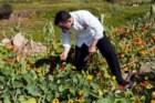 O chef Vincent Farges a apanhar flores para utilizar nos pratos que confecciona na Fortaleza do Guincho.