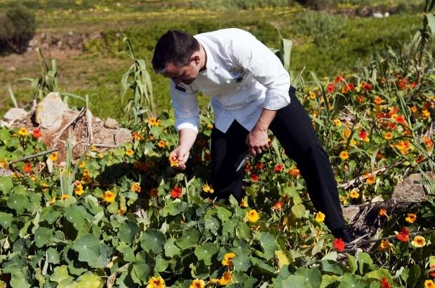 Flores podem ser alimento