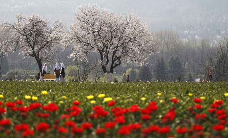 Caxemira (administrada pela Índia), 29.03.2012. Jovens estudantes em campo de tulipas. Expõe mais de dois milhões de tulipas e foi aberto a 29 de Março.