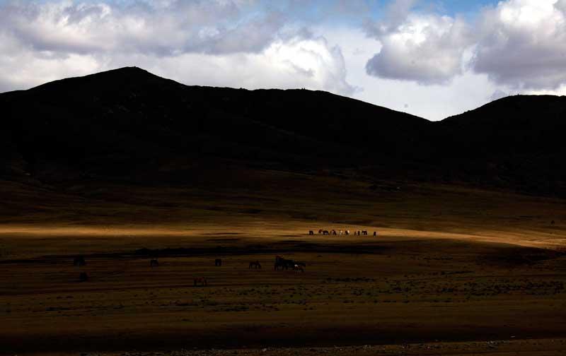 Em paisagem de tirar o fôlego, o pasto dos cavalos