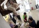 O café dos gatos de Viena