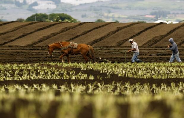 COSTA RICA, 16.05.2012. A lavrar a terra em Tierra Blanca de Cartago