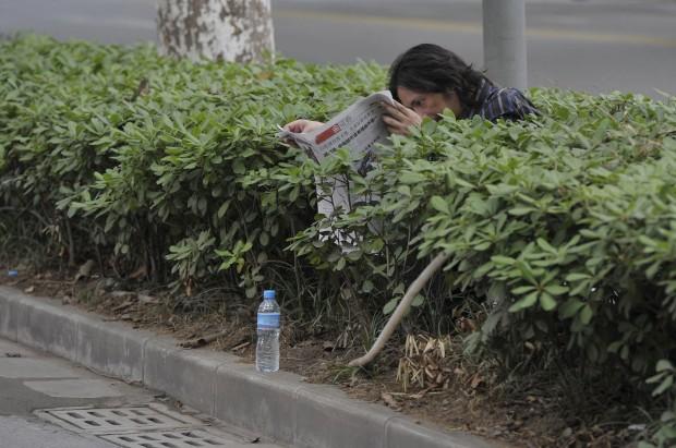 CHINA, 30.06.2012. Um homem lê o seu jornal, no meio dos arbustos. Porquê? Boa pergunta. O que sabemos é que esperava o filho sair da escola, onde foi fazer o exame de admissão. Em Nanjing, província de Jiangsu