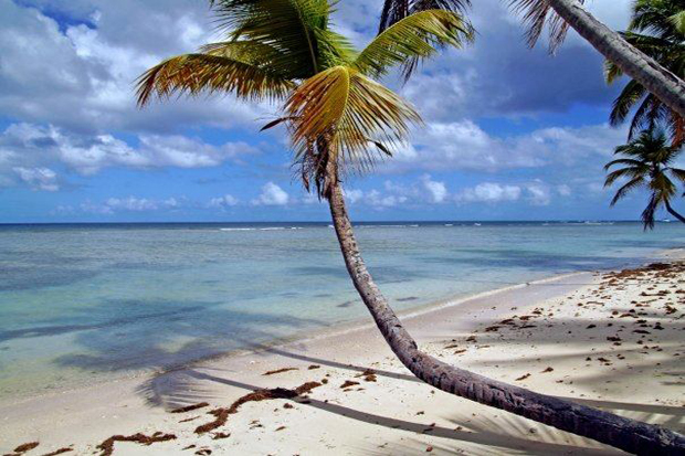Sonhos cor de Caraíbas