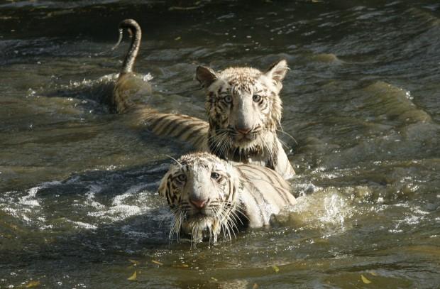 No parque zoológico de Nova Deli