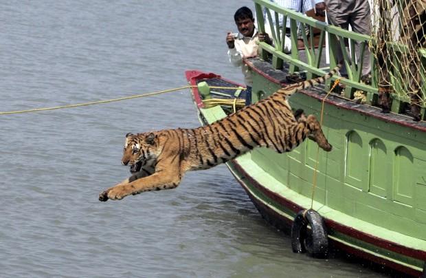 A saltar para a liberdade no rio Sundari