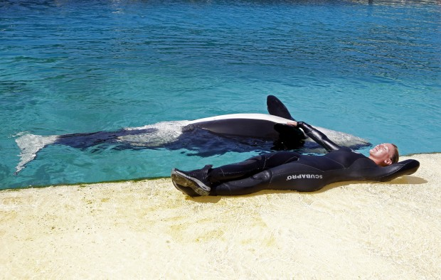 FRANÇA, 01.08.2012. A treinadora Amy Walton num momento de descanso com uma das suas orcas, estrelas do parque aquático Marineland em Antibes