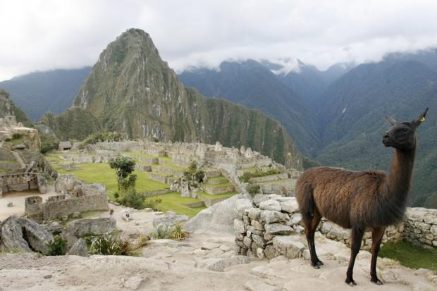 Um lama faz pose em Machu Picchu