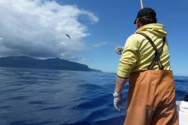 São Miguel.Na pesca do atum no Ponta dos Mosteiros da Caloura ao largo do Nordeste da ilha