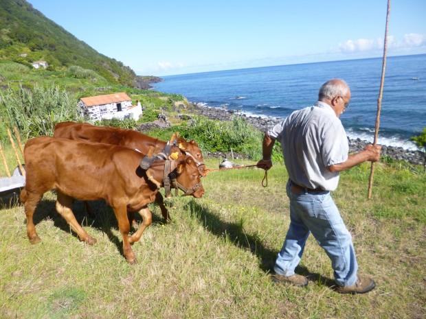 São Jorge. Serafim Brasil, agricultor e defensor da Fajã do Mero