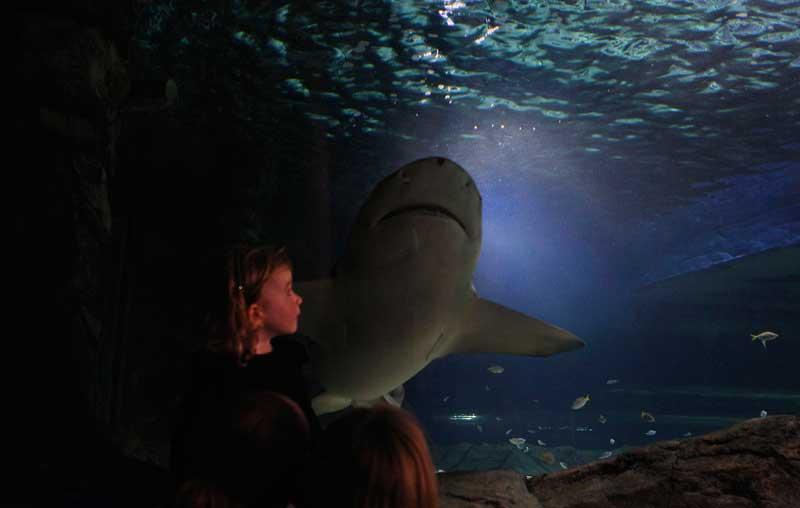 AUSTRÁLIA, 24/09/2012. Menina e tubarão na passagem oceânica do Aquário de Sydney