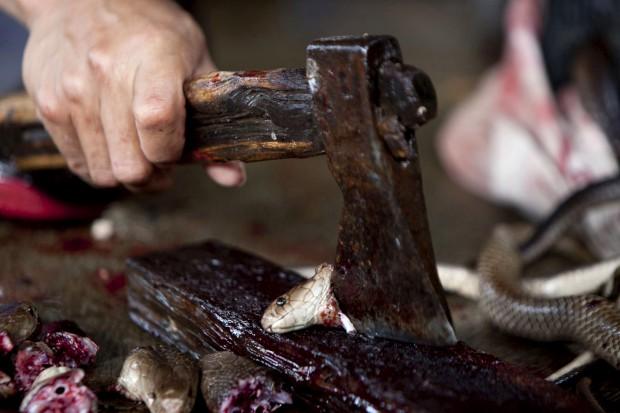 A preparar uma cobra num restaurante chinês em Yogyakarta, Indonésia