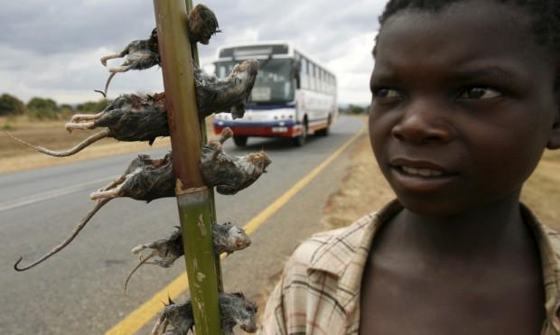 Um rapaz vende ratos cozidos na auto-estrada principal da capital do Malawi, Lilongwe.
