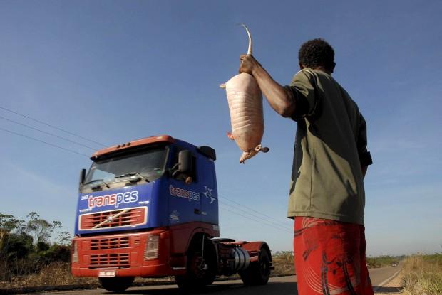 É proibido mas ainda assim se vê à venda pelas estradas: o jovem vendedor Leonardo vende, numa estrada da   Amazónia brasileira, um armadilho que caçou.