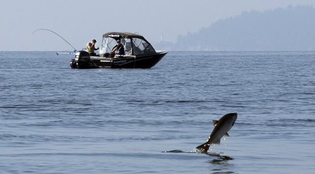 CANADÁ, 9.10.2012. Um salmão salta por comida enquanto pescadores desportivos passam, no rio Capilano, West Vancouver