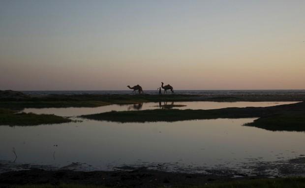 PAQUISTÃO, 9.10.2012. A conduzir os camelos ao pôr-do-sol em Carachi