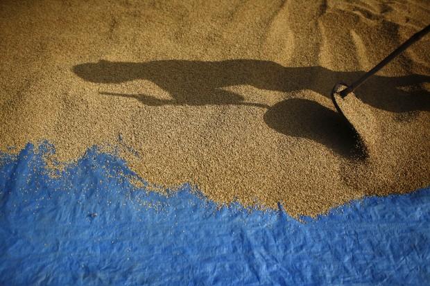 NEPAL, 10.10.2012. A sombra de um agricultor desenha-se no chão enquanto seca grãos de arroz
