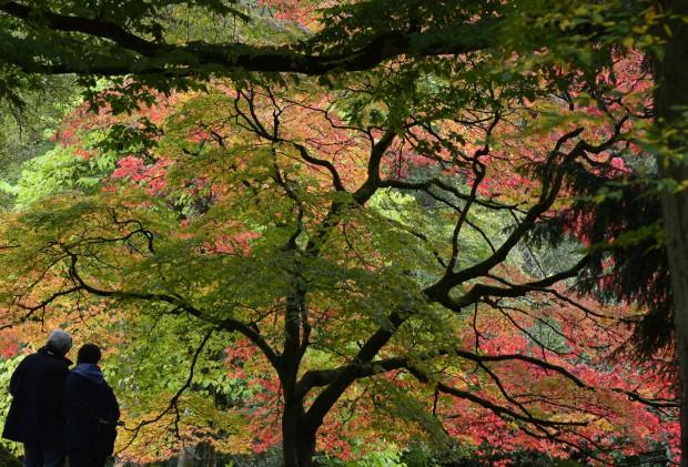 REINO UNIDO, 18.10.2012. O Outono pinta o Westonbirt Arboretu, jardim botânico especializado em árvores e arbustos em Gloucester