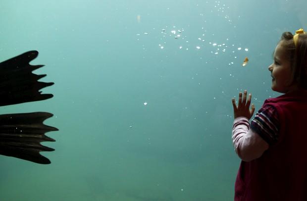 ALEMANHA, 19.10.2012. Uma menina admira um leão marinho no zoo de Frankfurt