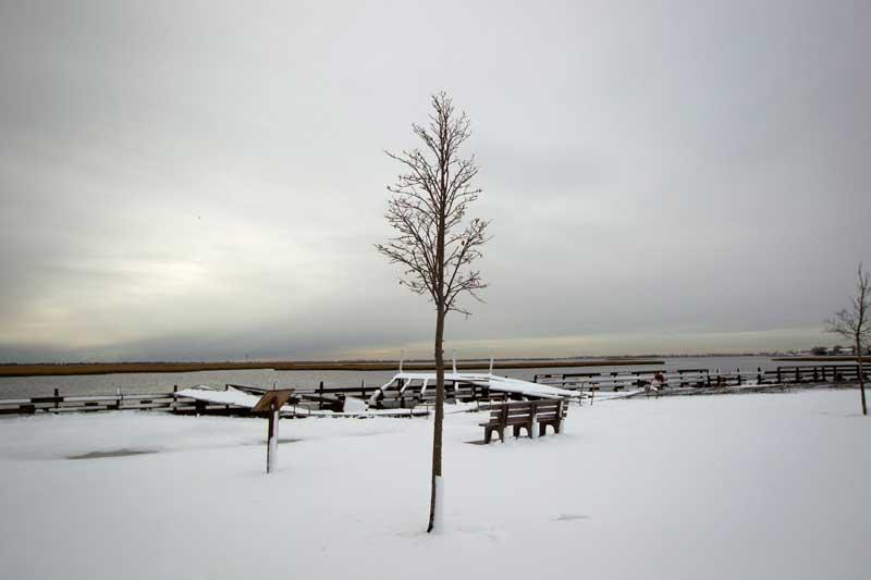 EUA, 8.11.2012. Uma solitária árvore, firme na neve, frente ao cais de Freeport, Nova Iorque