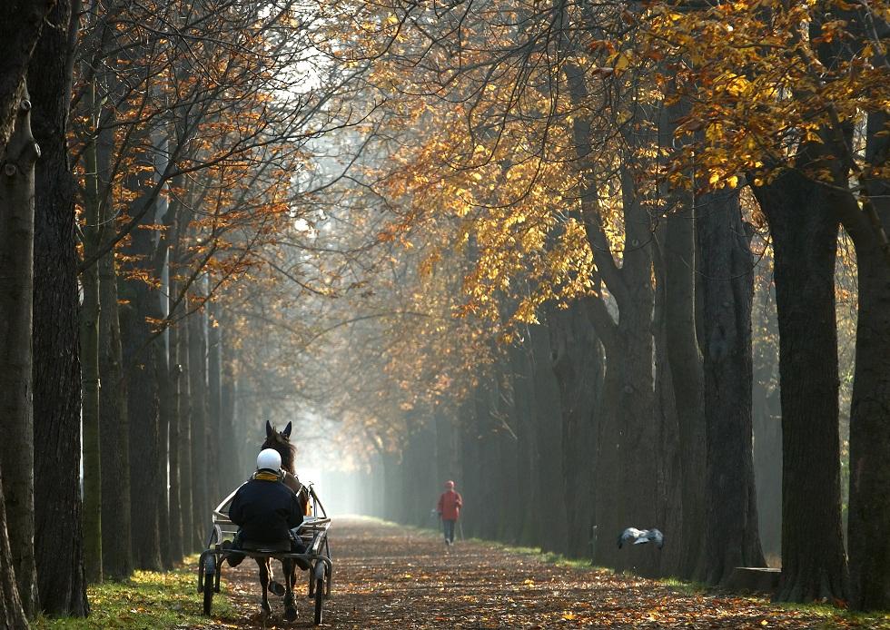 Áustria, 14.11.2012. Outono em Viena