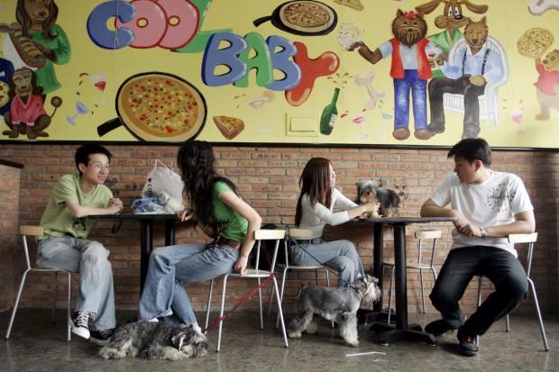 Fica em Pequim, chama-se Coolbaby. É um restaurante de cães. Mas, aqui, esqueça a ideia de que os cães em questão são matéria-prima... Pelo contrário, são as estrelas. Os donos podem levar os seus cães para o restaurante e, para os animais de estimação, há piscina, percurso de obstáculos ou recreio cheio de brincadeiras. Para os bichinhos, há ainda menus especiais.