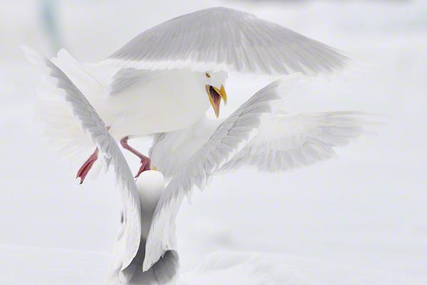 Melhor imagem isolada em portefólio - Planeta Selvagem: Michal Jastrzebski (Polonia)