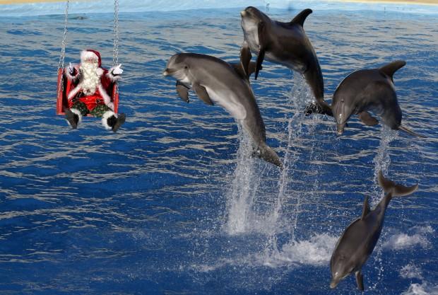 Um Pai Natal que, em vez de renas, tem golfinhos. Em Antibes, França.