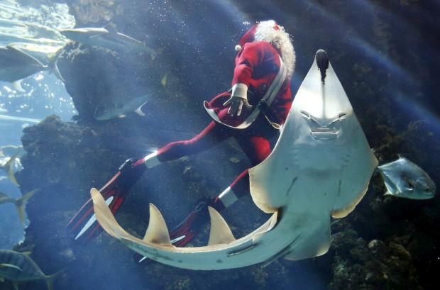 Pierre Frolla, um campeão mundial de mergulho, veste-se de Pai Natal para mergulhar no aquário do Museu Oceanográfico do Mónaco