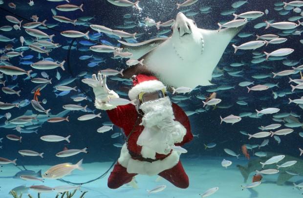 Já se sabe que não há aquário que passe sem o seu Pai Natal - este é no  Sunshrie de Tóquio, Japão