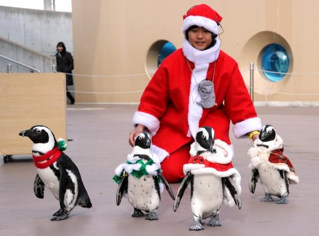 Até os pinguins... estes são do aquário Yoshikazu em Yokohama, Japão