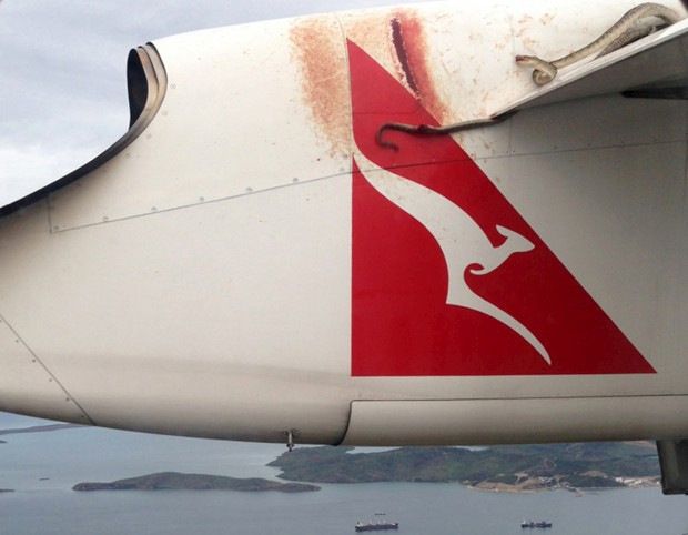 Uma cobra pitão de três metros, que viajou duas horas na asa de um avião da companhia australiana Qantas