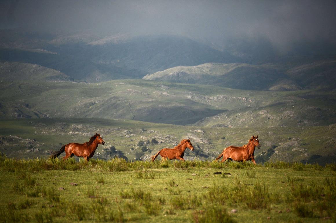 Cavalos na etapa entre Tucuman e Cordoba, na Argentina