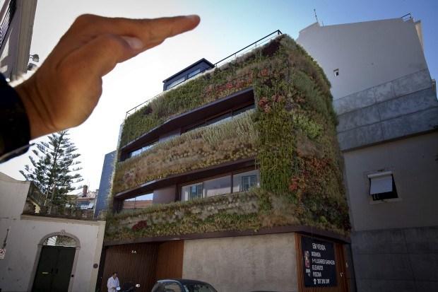 jardim vertical lisboa:Jardim vertical na fachada de um prédio da Lapa, Lisboa Nuno Ferreira