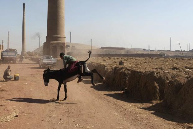 EGIPTO, 20.01.2013. A criança e o burro, perto de uma fábrica de tijolos em Giza