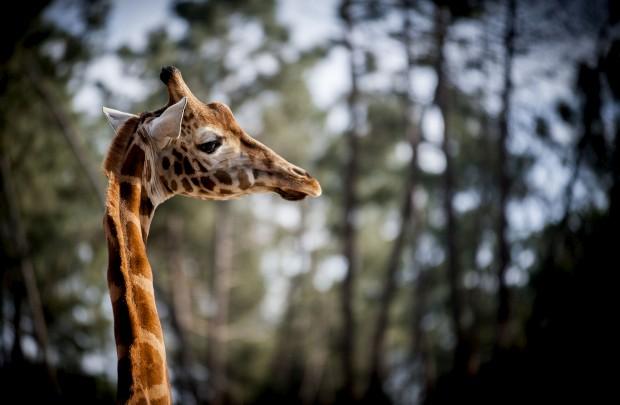 Badoca Safari Park, Santiago do Cacém