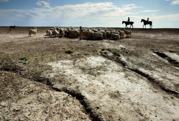 A guardar o rebanho de ovelhas em campos marcados pela seca. Em Brewarrina, a 800km de Sydney