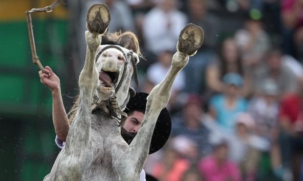 URUGUAI, 25.03.2013. Um gaúcho cavalga um cavalo por domesticar no festival anual Criolla
