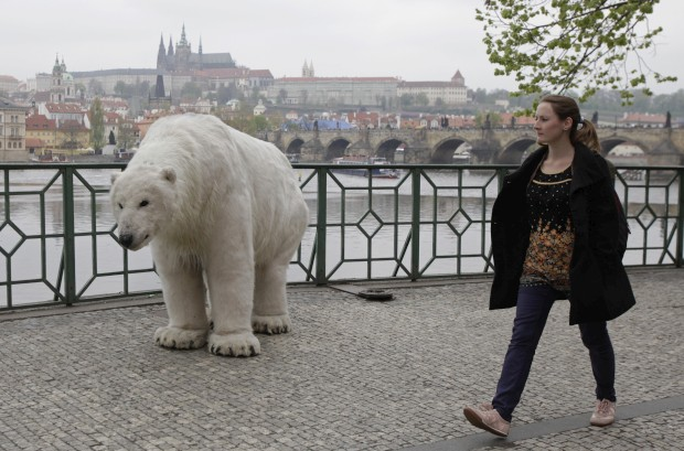 REPÚBLICA CHECA, 29.04.2013. Um urso em Praga: no caso, um activista do Greenpeace com fato de urso polar, participante numa campanha pela defesa do Ártico