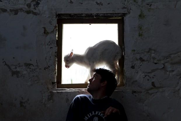 IRLANDA DO NORTE, 30.05.2013. Um criador de caprinos (da quinta Broughgammon, perto de Ballycastle) e um cabritinho saltitão com vontade de ver o mundo