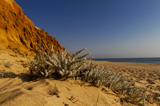 Praia do Pinheirinho (Grândola)