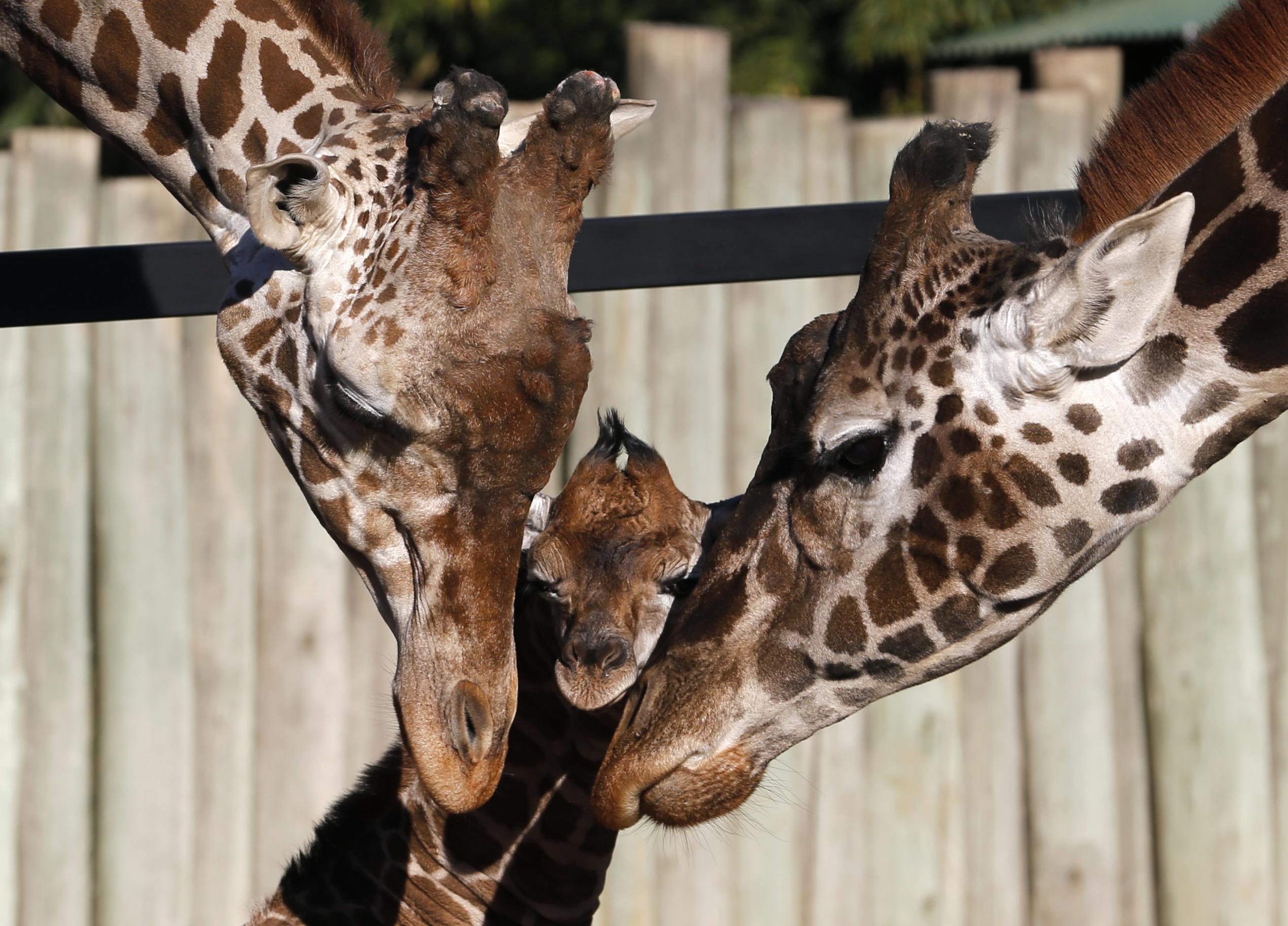 ARGENTINA, 16.7.2013. Recém-nascido e pais no zoo de Buenos Aires