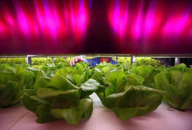 Alimentos (e um planeta) para todos