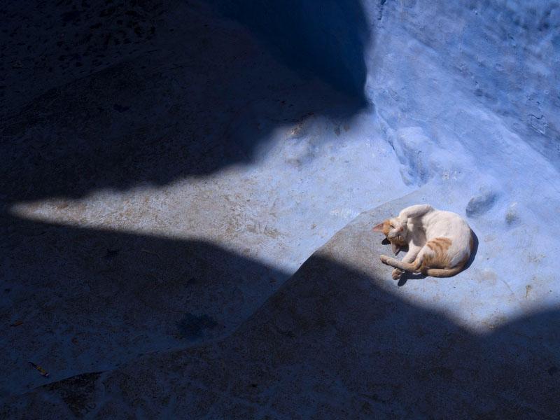 Em qualquer parte de Marrocos, os (muitos) gatos mostram-se afáveis