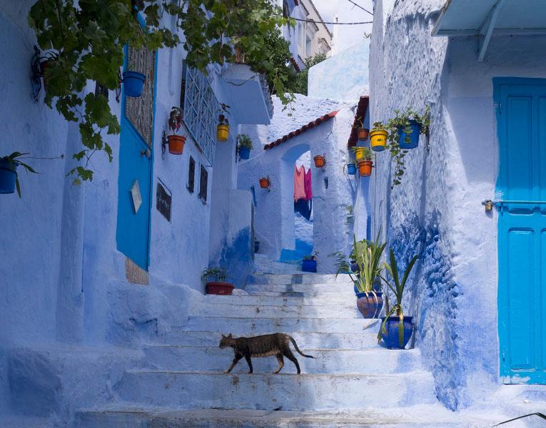 Além do azul, as flores animam o rendilhado de ruas