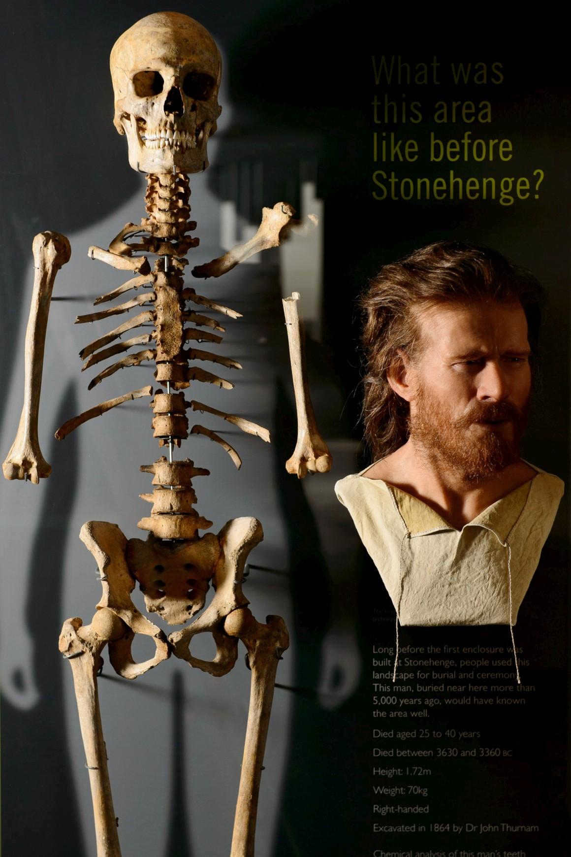 Em exposição: esqueleto de um homem do Neolítico, encontrado enterrado perto de Stonehenge, e a reconstrução realista do seu rosto